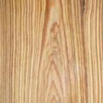 Cypress_Macrocarpa